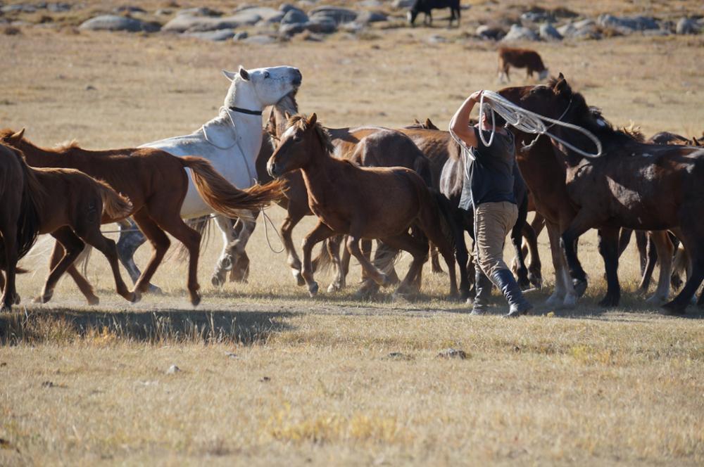 Traverser la Mongolie à cheval pour la bonne cause
