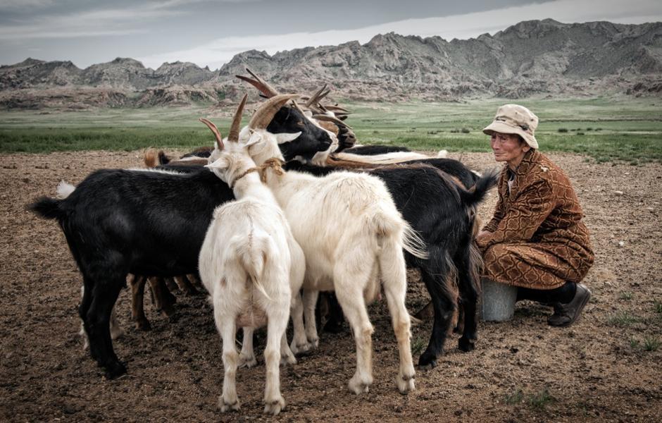Immersion dans la vie d'une famille nomade mongole : nos conseils