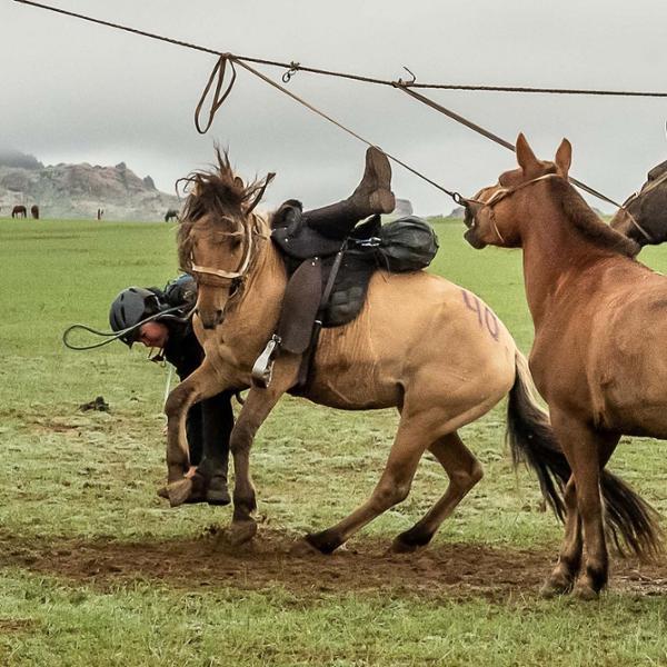 Deux courses à cheval pour découvrir la Mongolie en 2020