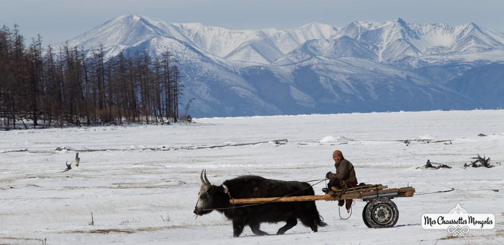 Mes chaussettes Mongoles : une marque éco-responsable