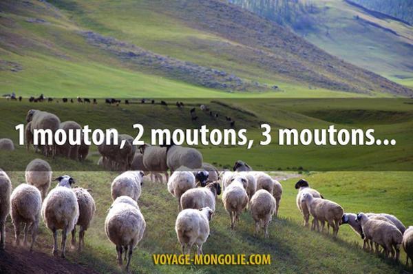 5 boulettes culturelles à ne pas commettre en Mongolie