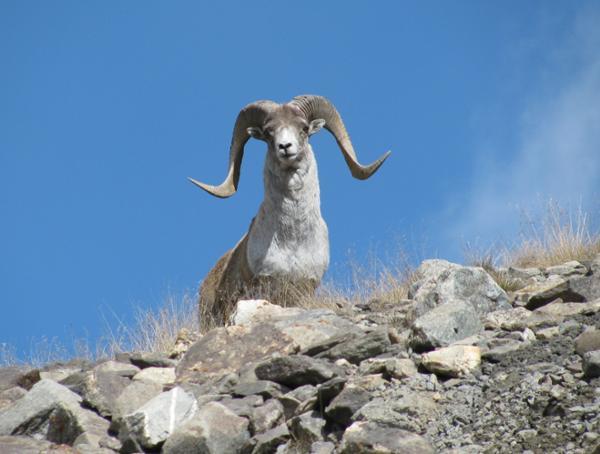 Les animaux emblématiques de Mongolie
