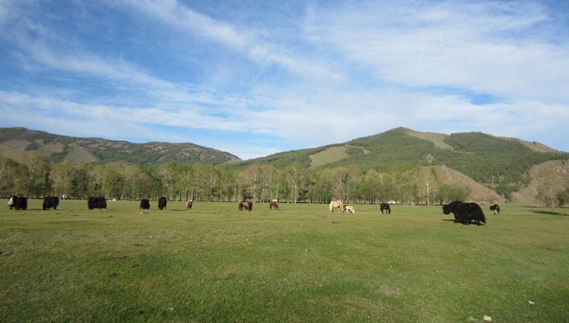 Les parcs nationaux à découvrir en voyage en Mongolie