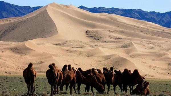 Où aller pour observer la faune de Mongolie
