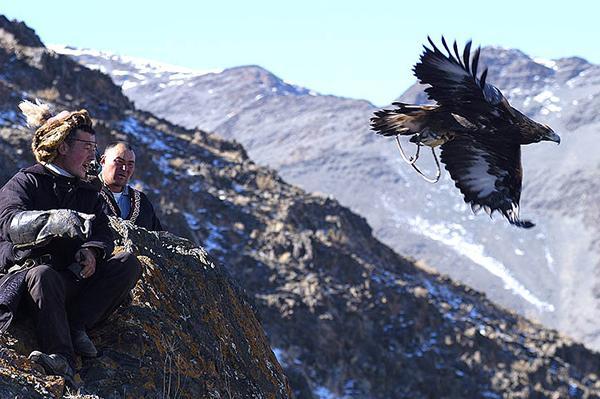 Partir à la rencontre des aigliers kazakhs de Mongolie dans l'Altaï