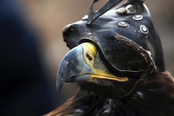 Meeting the Kazakh Falconers in Mongolia