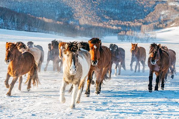 Les festivals d'hiver en Mongolie