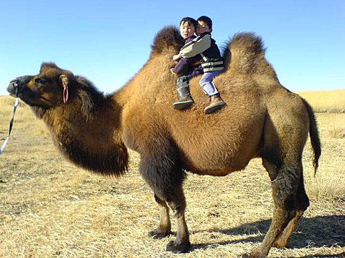Enfants sur le chameau