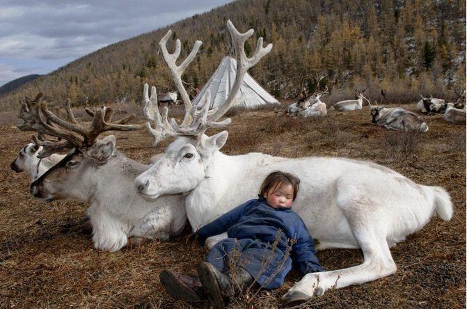 La jeune fille qui dort avec les rennes
