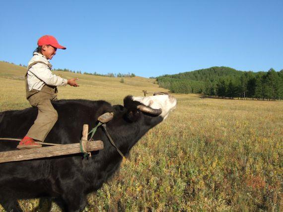 l'enfant meuneur de yak