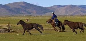 Cavaliers mongols avec chevaux