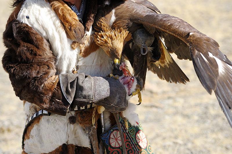 aigle-chasseur-kazakh