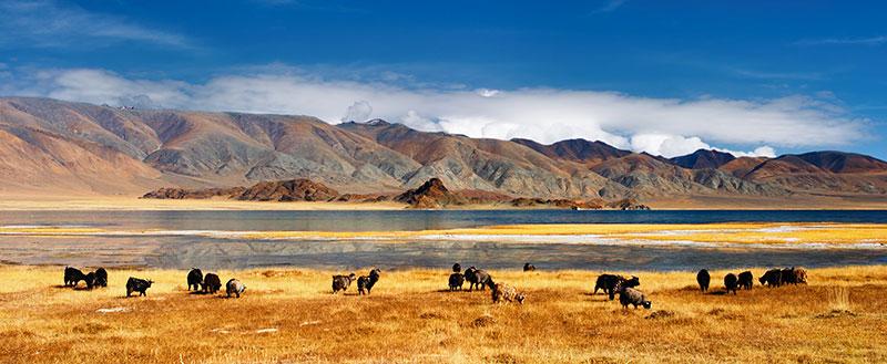 la-mongolie