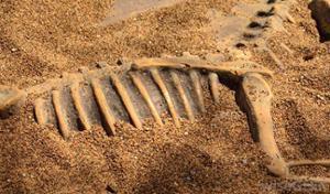 Fossiles dinosaures desert gobi