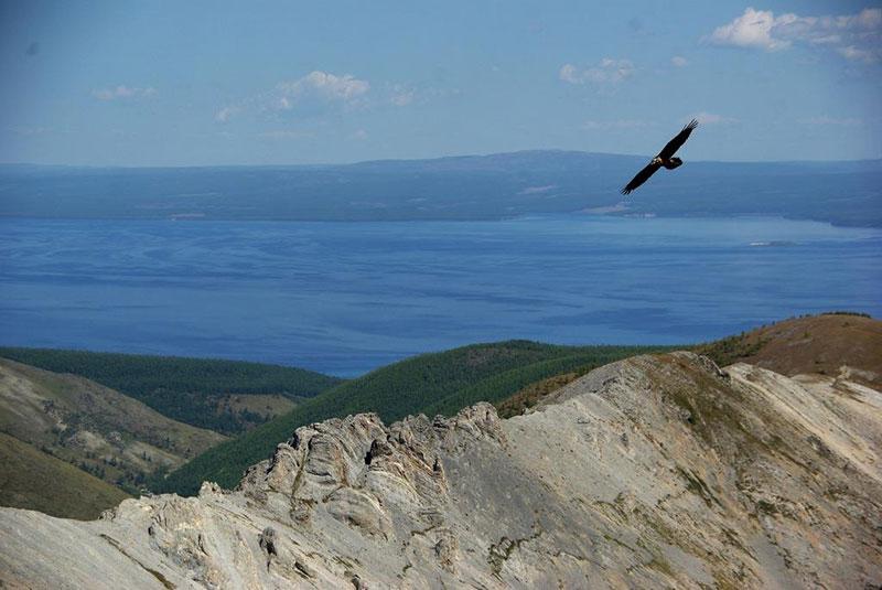 khovsgol eagle