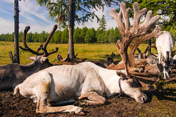 rennes mongoles