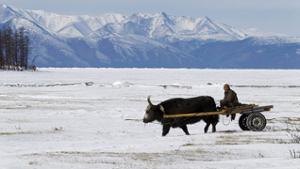 tour hiver Mongolie