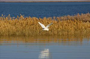 lac d'Ögii