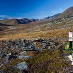 voyager avec son chien en Mongolie